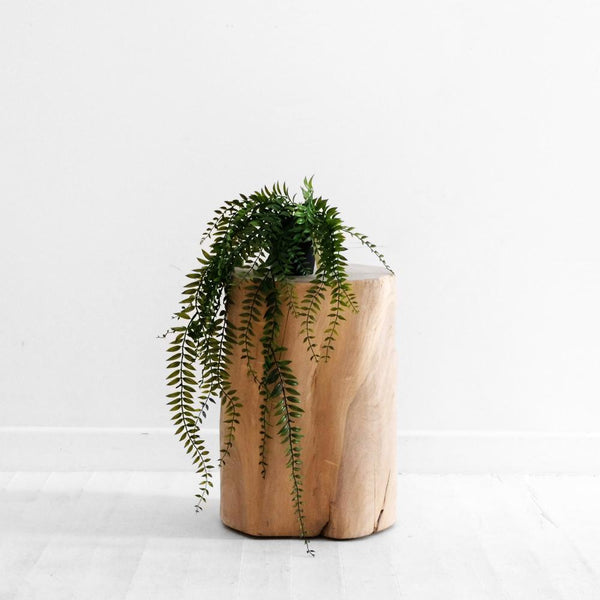 Sword Fern Potted Plant
