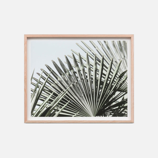 Fan Palm View Framed Art