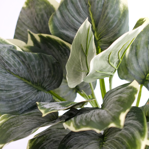 Frosted Variegated Hosta Bush