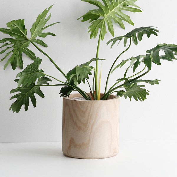 Paulo Tall Indoor Planter - Large