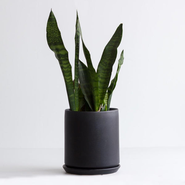Oslo Planter Jet Black - XL