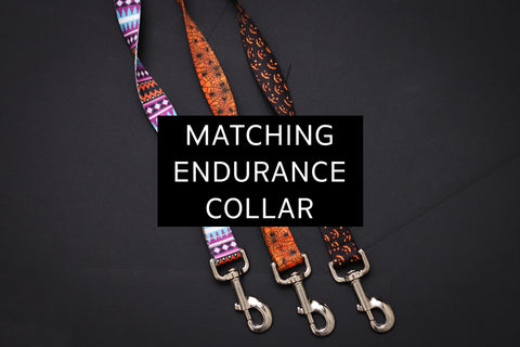 Halloween Endurance Collars