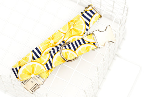 Lemons and Stripes Dog Collar
