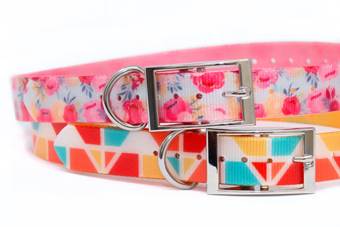SPRING LAUNCH Waterproof Titan Dog Collar - Dirtproof, Stinkproof, Waterproof by Zaley Designs