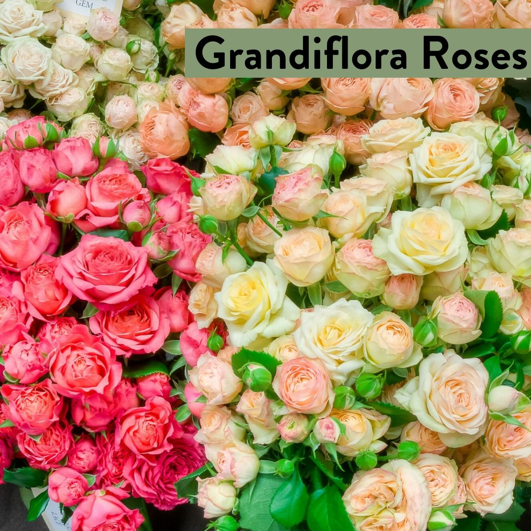Australian Grown Flowers Grandiflora Roses