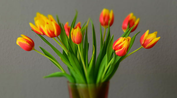 All You Need To Know About Tulip Flowers