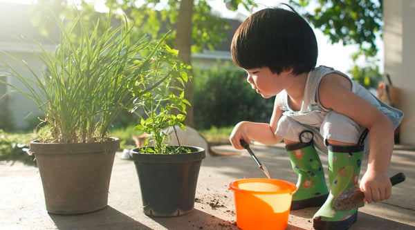 Top 10 Baby-Friendly Plants