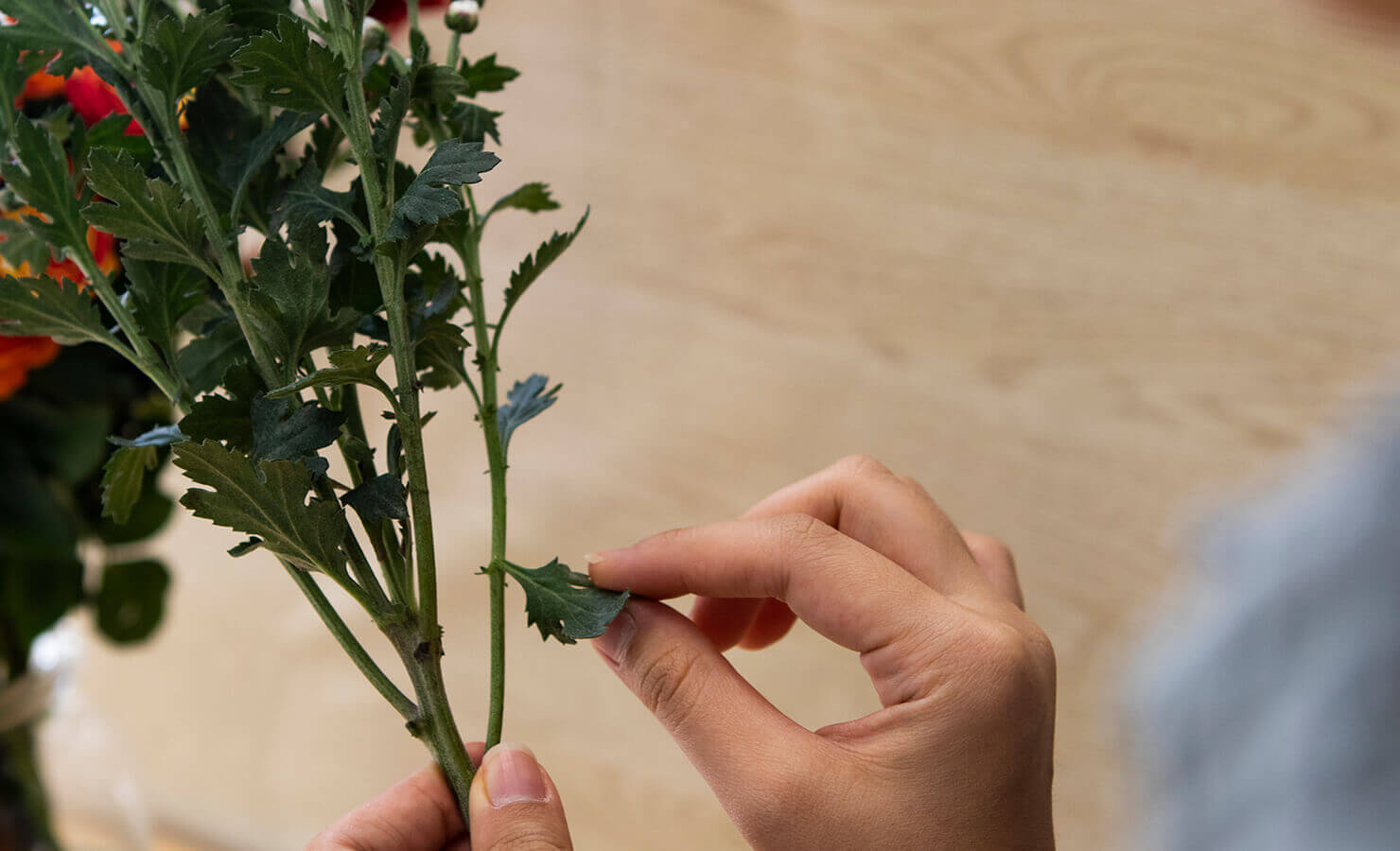 diy-dry-flower-bouquet-remove-foliage