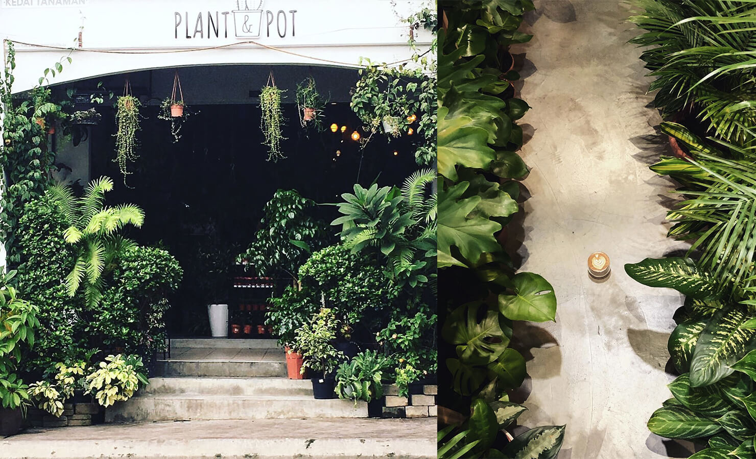 bloomthis-5-plant-flower-cafes-you-have-to-visit-05-sipping-corner-cafe