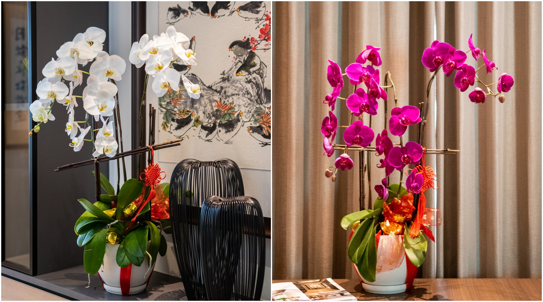 bloomthis-chinese-new-year-gift-guide-chinese-new-year-phalaenopsis-orchids