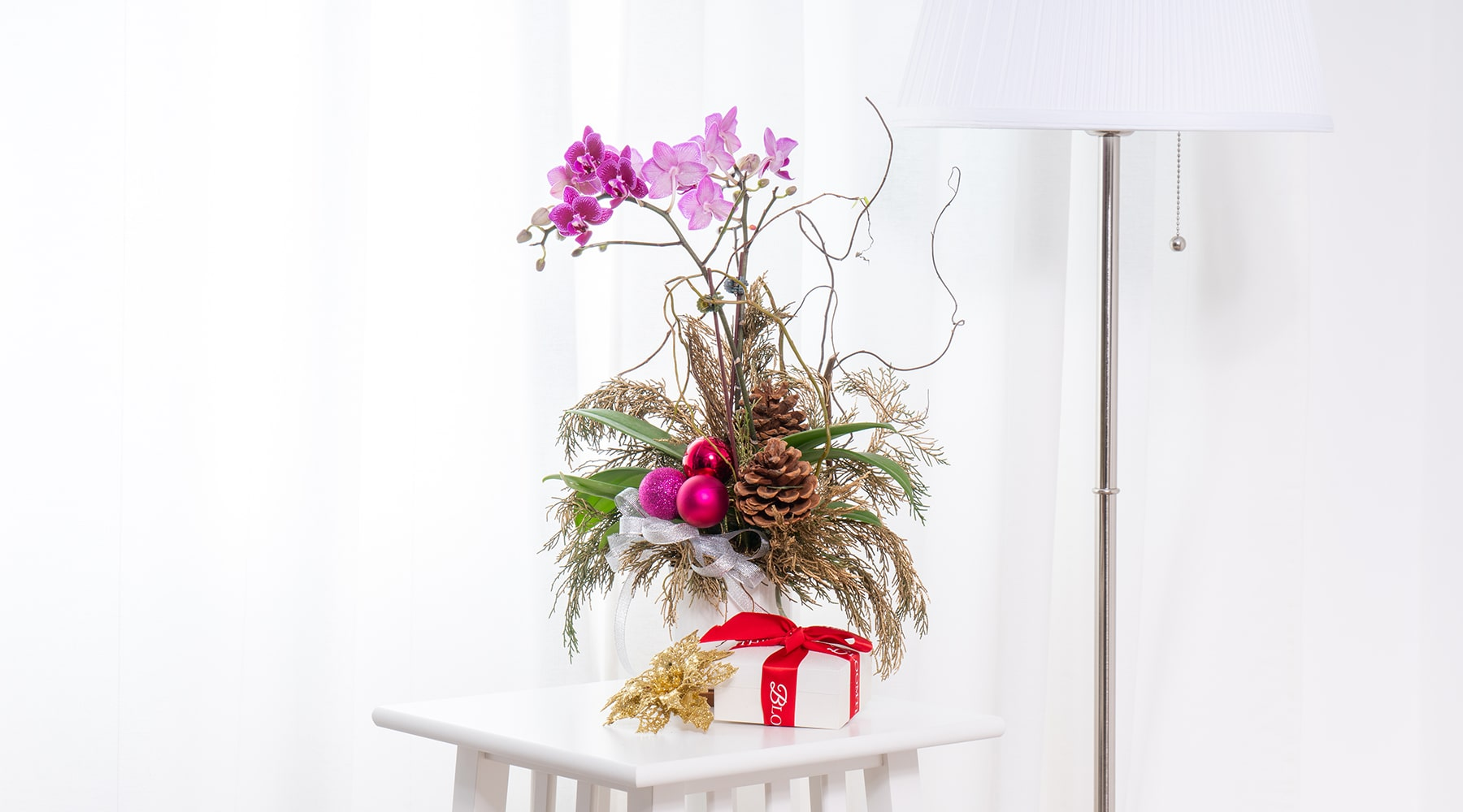 bloomthis-mini-christmas-orchid