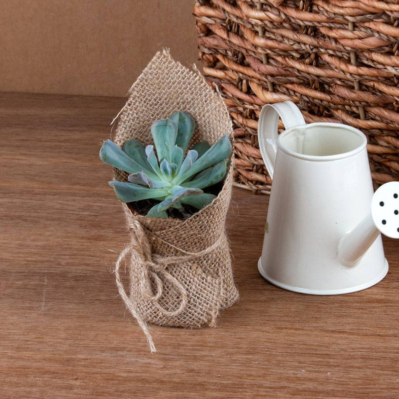 Succulents (Set of 3)