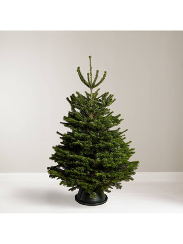 Deluxe Nordman Fir Christmas tree