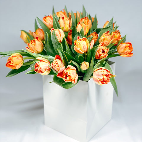 Orange Tulips (double tulips)