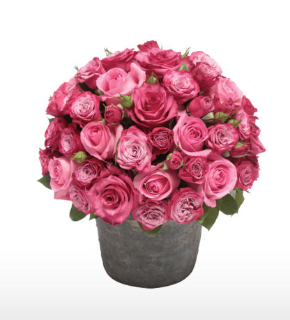 Rosalie and Peony-   Roses in a pot - Choose your colour
