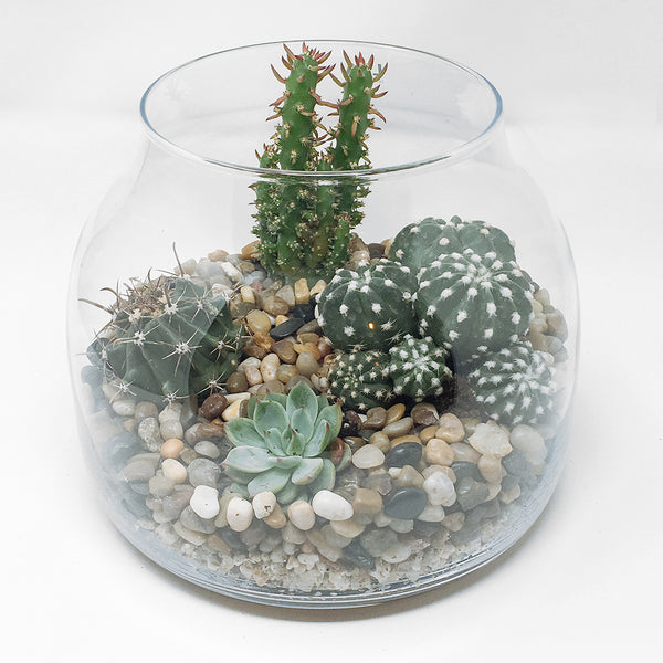 Funnel terrarium - large
