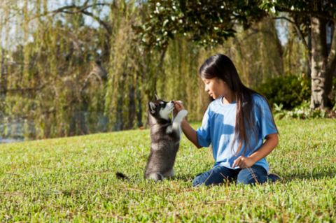 Animal & Pet Care with Dog Training Course Bundle