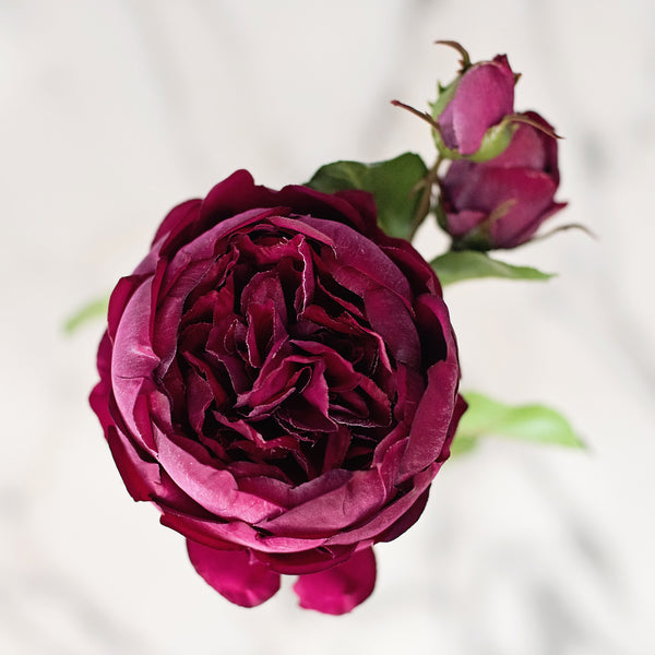 TRADE burgundy english rose