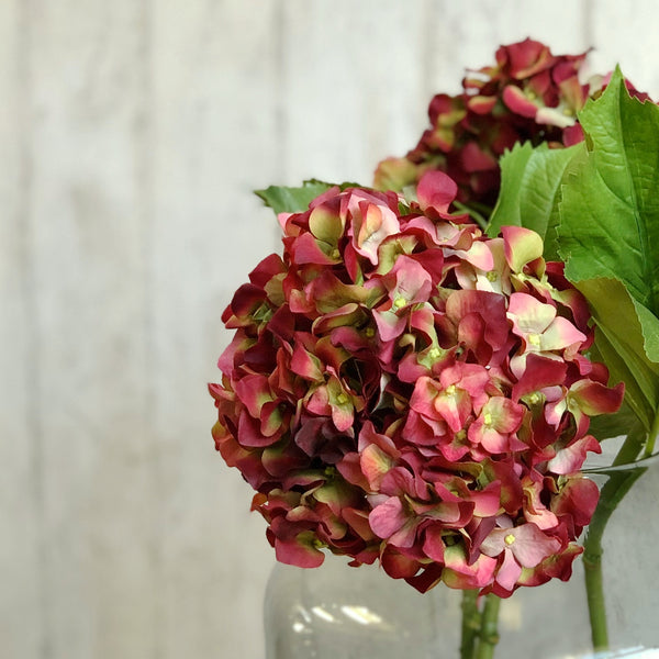 TRADE red dried hydrangea