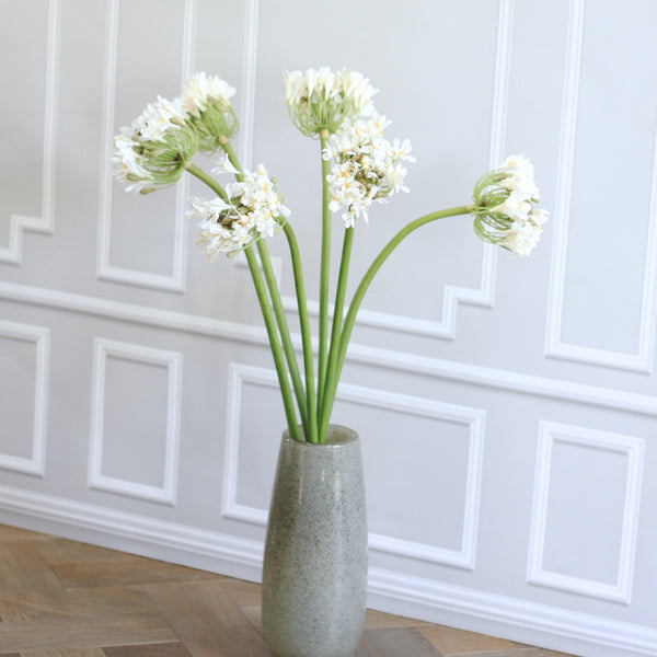 TRADE white agapanthus  (6 stems) - REDUCED - 30% OFF