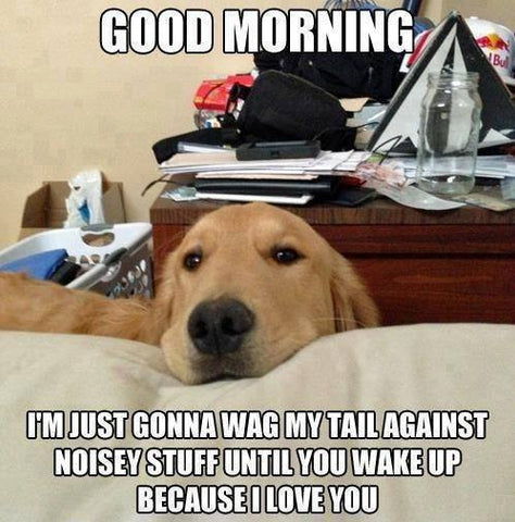 dog waking up owner meme