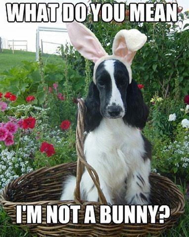dog with easter ears