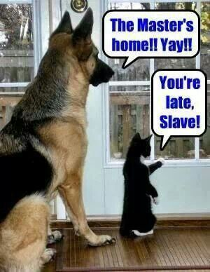 dog and cat meme funny