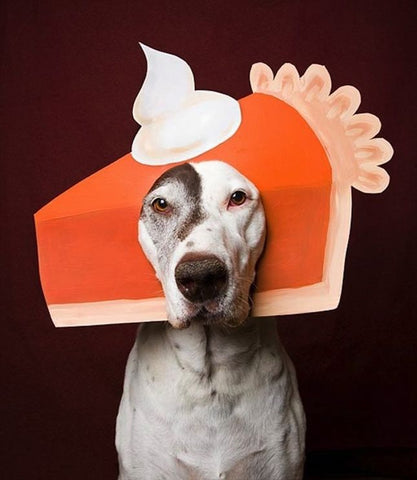 dog dressed up as pumpkin pie