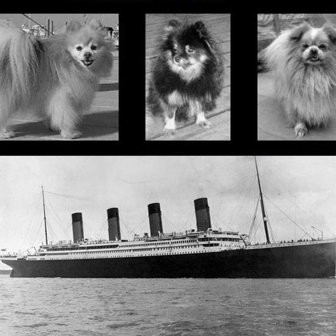 dogs who survived Titanic