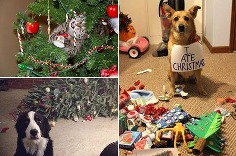 dogs eating christmas presents