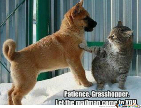 dog and cat funny meme