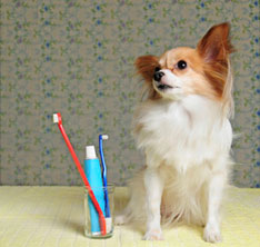 dog and toothbrush