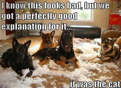 Fun Dog Meme : News & blogs for dogs helpful tips some fun stuff for dog owners