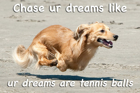 motivational dog meme