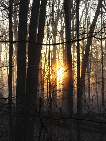 sunrise through bare trees