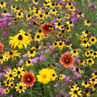Midwest Wildflower Garden Mix
