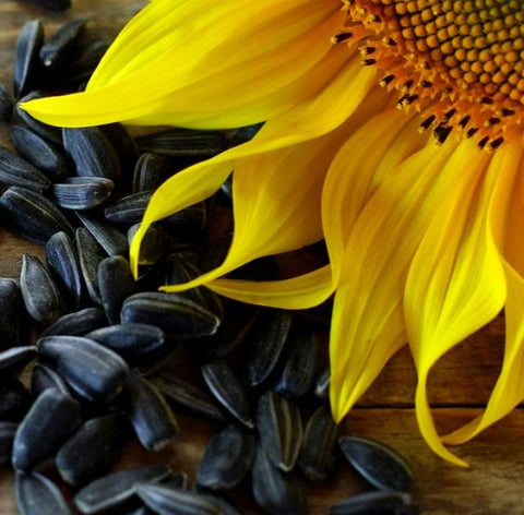 Adi Naturals - Oil Sunflower Oil  (Cold Pressed)