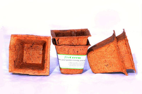 For Green Coir Pot 4'' set of 6 Spanish Cup Biodegradable plant pots