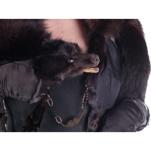 Vintage Dark Brown Full Fox Fur  Wrap/Scarf  1930S Celluloid Clip - The Best Vintage Clothing  - 6