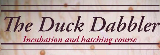 The Duck Dabbler