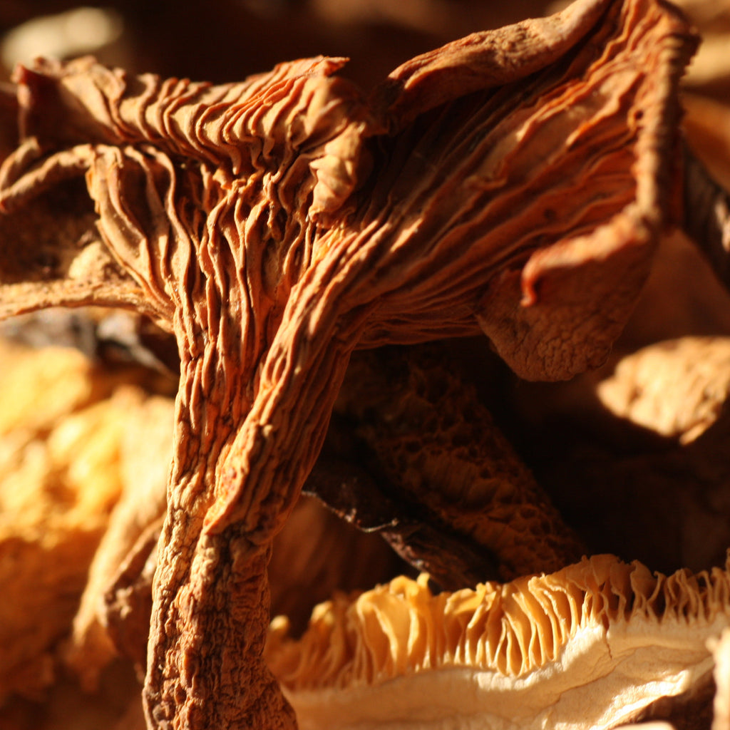 Image of Smoked Forest Mushrooms - The Artisan Smokehouse
