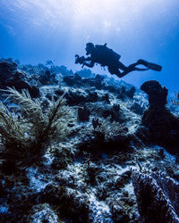 Scuba Diving Wallpaper 1