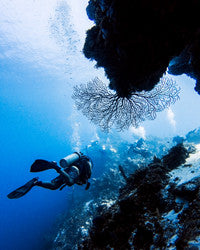 Scuba Diving Wallpaper 2
