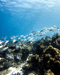 Scuba Diving Wallpaper 3
