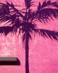 Florida Tropics Wallpaper