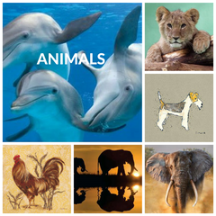 Animal Art Print Collection