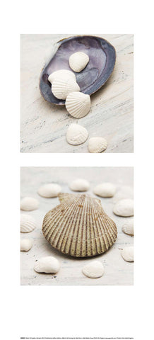 Shell Whisperers - Art Print