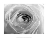 Black & White Rose Art Print Wallart Picture - Custom Framing, Art Prints, Framed Pictures, Ready Made Frames Artists Materials & more - Art Prints - art@home