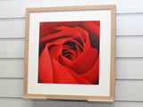 Framed Red Rose