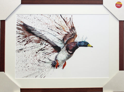 Framed Flying Duck